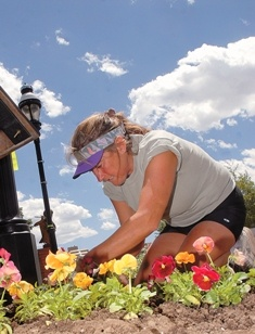 A Town employee plants flowers in early summer